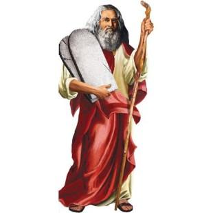 Tarjeta - MOSES